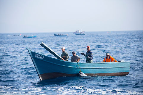 Avistamiento Orcas, Tarifa