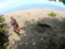 Desove de tortugas en Tortuguero, Costa Rica