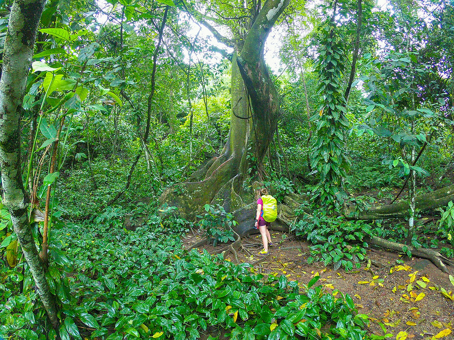 Corcovado. Costa Rica