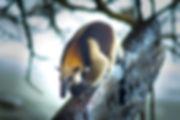 Oso hormiguero. Parque Nacional de Corcovado. Descubre Sin Limites