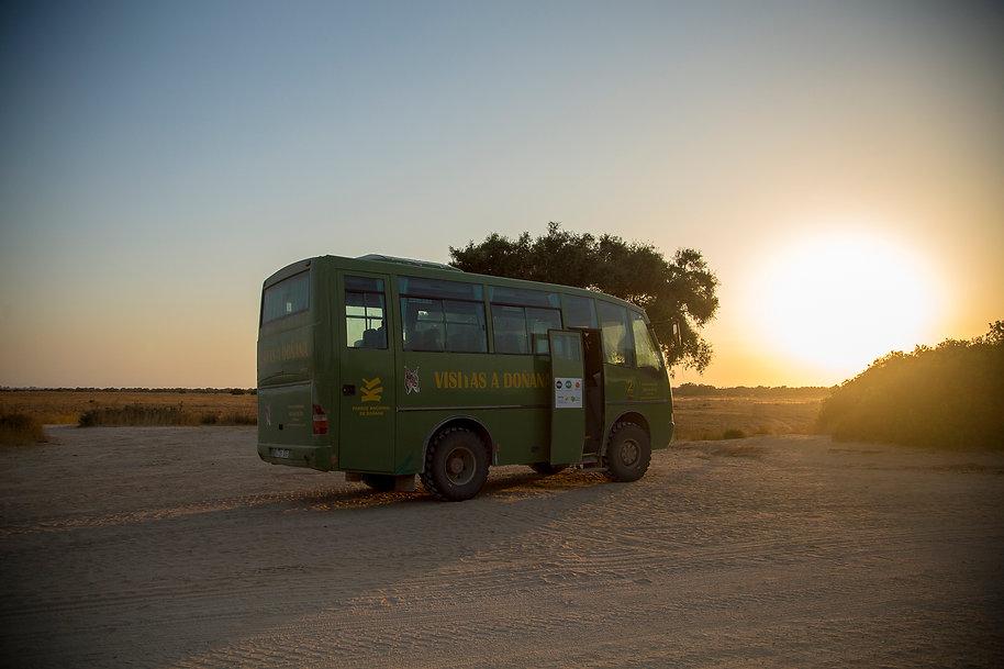 Parque Nacional de Doñana, Descubre Sin Limites