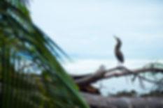 Garza tigre. Parque Nacional de Corcovado. Descubre Sin Limites