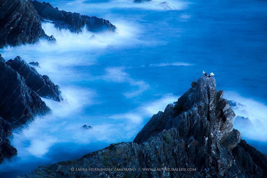 Cigüeñas en Cabo Sardao, Portugal