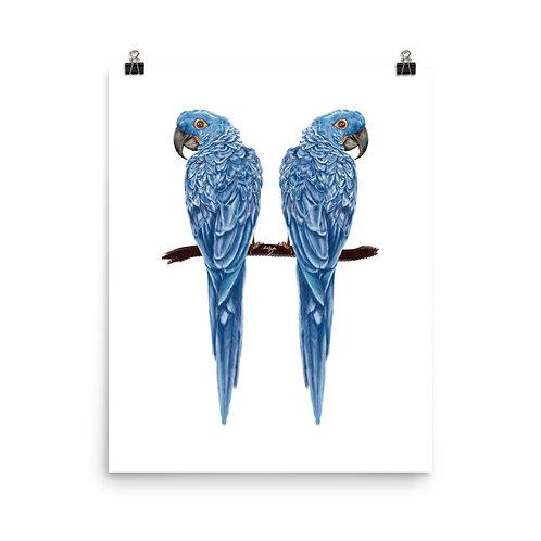 Linamal Blue Macaw Poster
