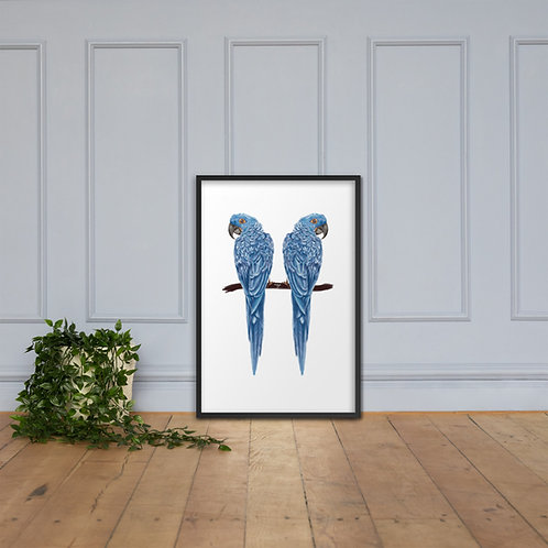 Linamal Blue Macaw - Framed poster