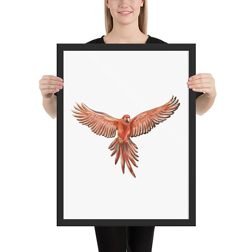 Linamal Red Macaw- Framed poster