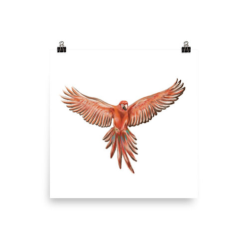 Linamal Red Macaw Poster