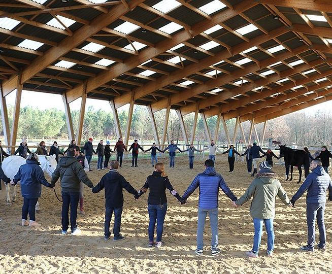 horse coaching-sensenequilibre-potentiol