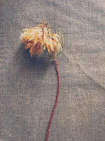 Dry bride flower