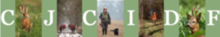 lievre, chasse, chevreuil, roebuck, chien, labrador