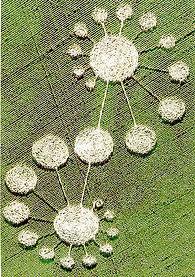 crop circle image taken high up, looks like spiraling circles