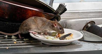 Rodentshd.jpg