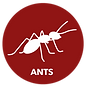 Buttons_Ants.png