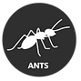 Buttons_Ants_edited.png