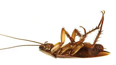 Roacheshd.jpg