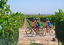 wine-touring-on-bikes.jpg