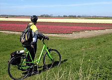Cyclists_tulip_field.jpg