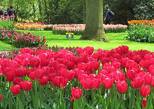 _data_pic_Holland_Holland-Tulip Cruises