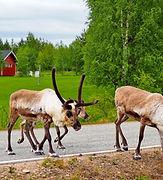 eurohike-finnisch-lappland-aekaeslompolo