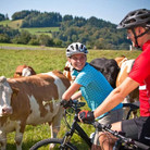 csm_Bauernhoftour_RadfahrermitKuehe_b052