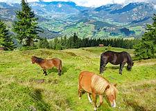 eurohike-bayerische-und-salzburger-alpen