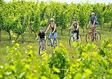Radfahrer_Weingarten kopie.jpg