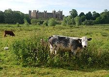 eb-framlingham-castle-from-the-mere.jpg
