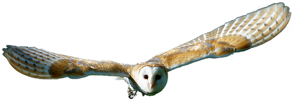 flying-owl-png-8.png