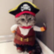Halloween Funny Pet Clothes Pirate Dog Cat Costume Suit