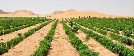 desert farm.jpg
