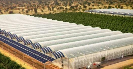 desertfarm.png