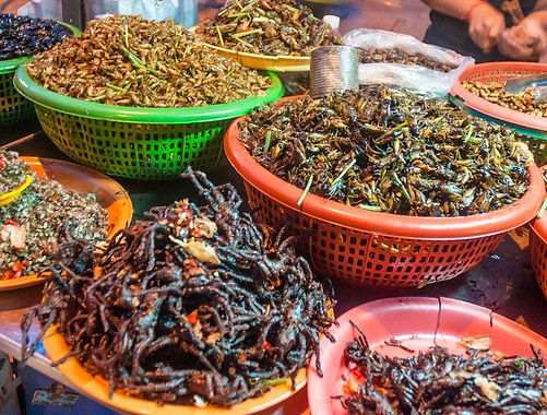 edible insects.jpg