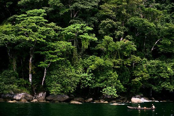 rainforest madagascar.jpg