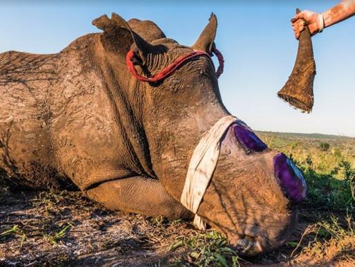 Os crimes contra a vida silvestre podem ser uma fonte de futuras pandemias.