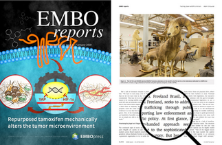 ARTICLE PUBLISHED ON EMBO REPORTS