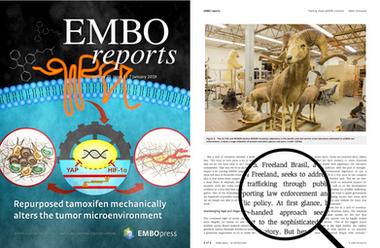 ARTÍCULO PUBLICADO EN LOS EMBO REPORTS