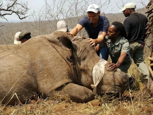 Campanha Stop the Illegal Wildlife Trade - Pare com o comércio ilegal de espécies silvestres