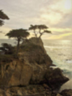 Monterey Carmel 17 Mile Drive Lone Cypress Tree  by Land's End Tour Company - The Best Custom Private SUV Tours From San Francisco