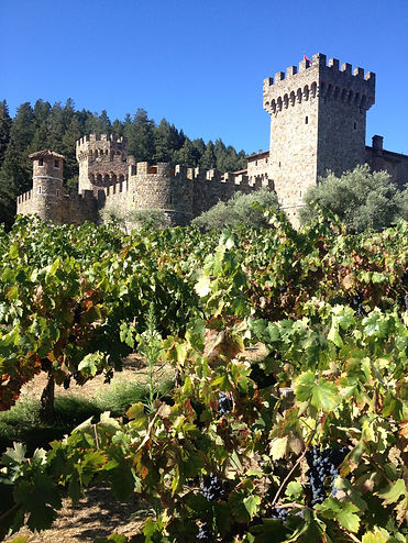 Castillo De Amorosa - The Castle Winery. Fall Harvest Grape Vines. Napa Wine Tour by Land's End Tour Company - Custom Private SUV Tours From San Francisco