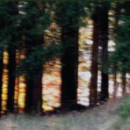 Biotel-Bergwald.png