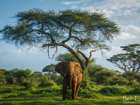 We Might Be The Last Generation To See Elephants Like This
