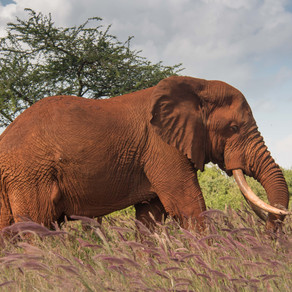 Resolution to close domestic ivory trade passed at CITES