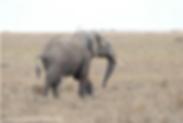 Spear in Elephant