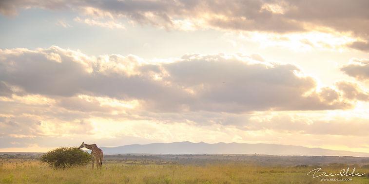 Giraffe-Nairobi-National-Park-Bee-Elle