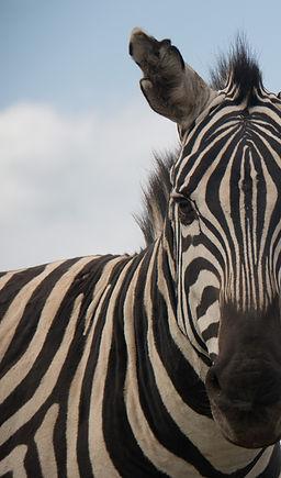 lightroom-tutorials-for-wildlife-photogr