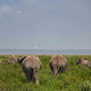 It's time to turn our backs on elephant rides