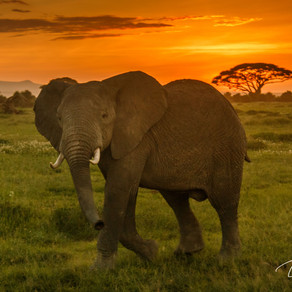 Two researched elephants shot for trophies in Zimbabwe