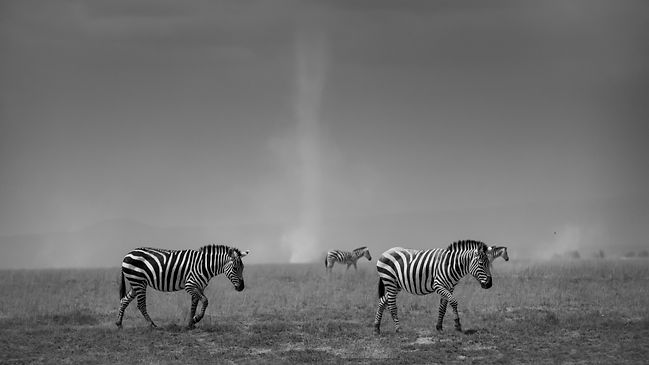 Zebra and Dust Devils