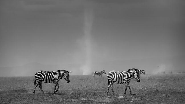 Zebra and Dust Devils