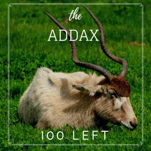Addax - Bee-Elle - African Wildlife Conservation